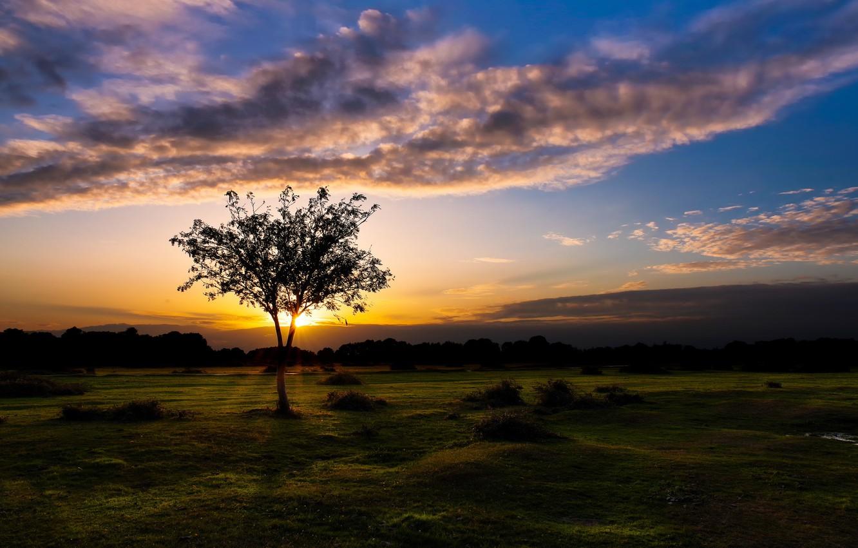 Photo wallpaper sunset, England, Fritham