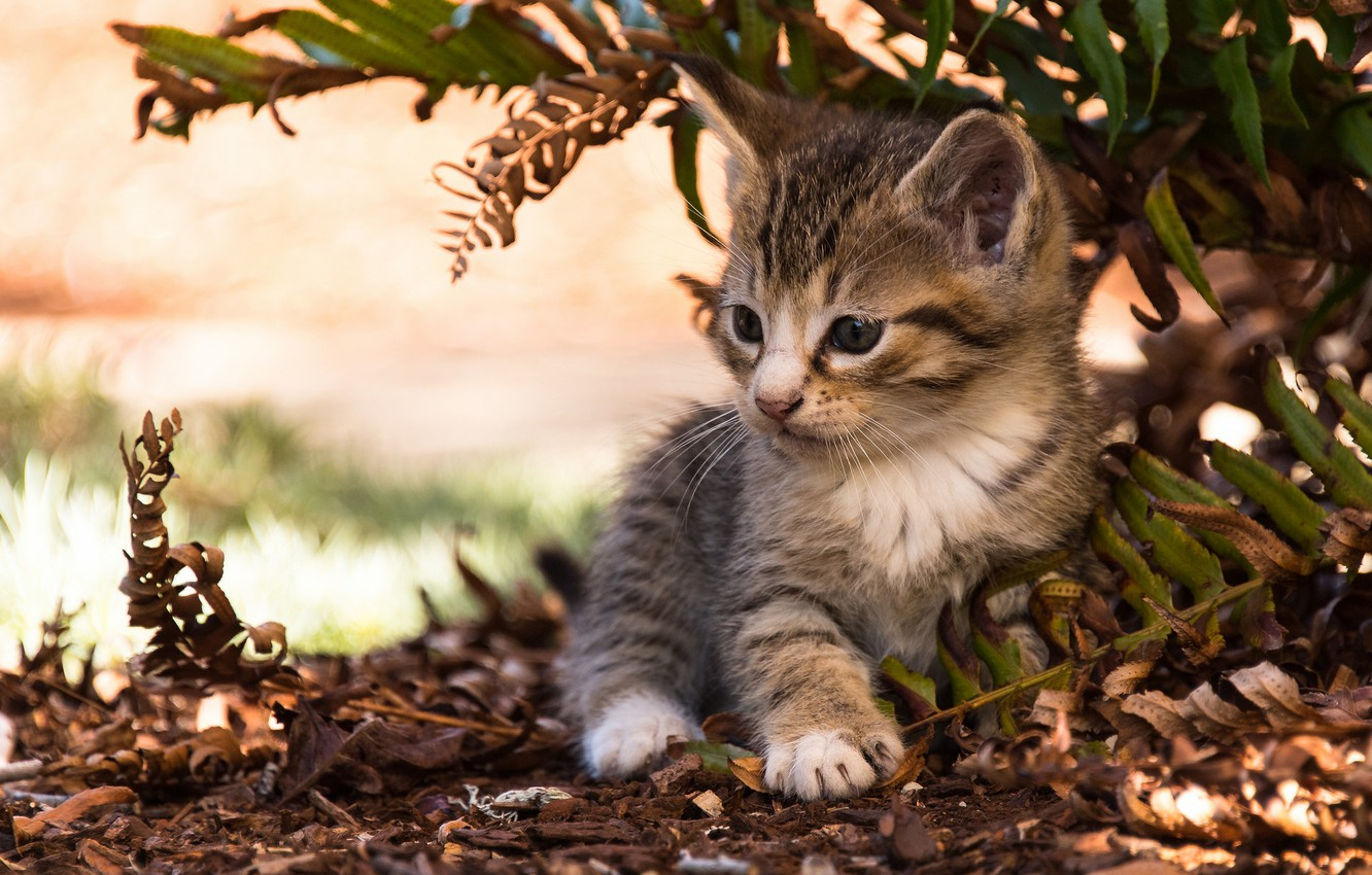 Photo wallpaper leaves, baby, kitty