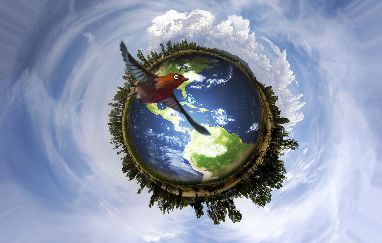 Wallpaper Earth Peace Sky Nature Bird Save Earth Images For