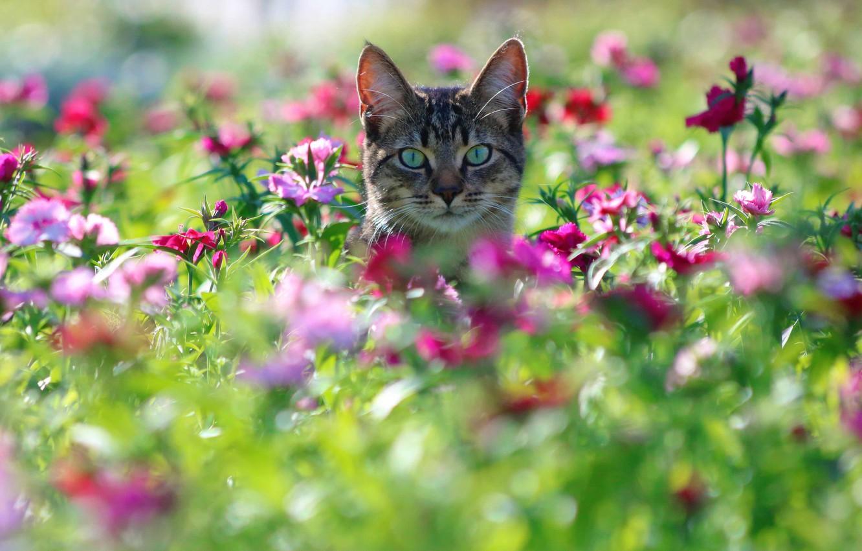 Photo wallpaper cat, cat, look, flowers, muzzle, bokeh, clove