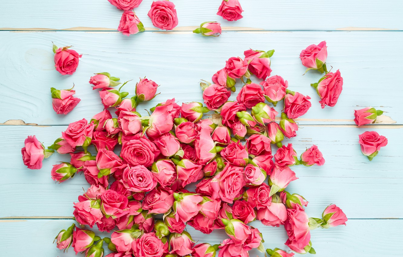 Photo wallpaper flowers, roses, pink, buds, wood, pink, flowers, roses