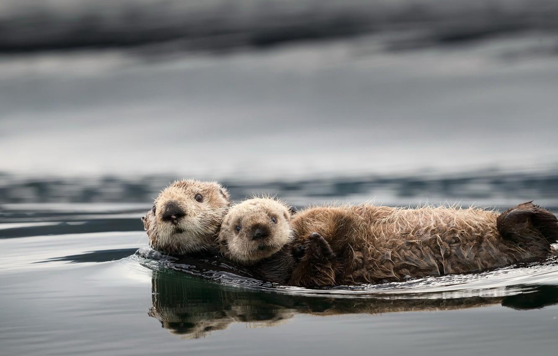 Wallpaper Nature Background Otters Images For Desktop