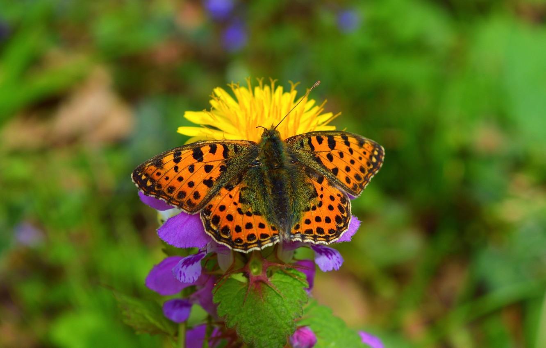 Photo wallpaper flower, Macro, Spring, Butterfly, Spring, Bokeh, Macro, Butterfly