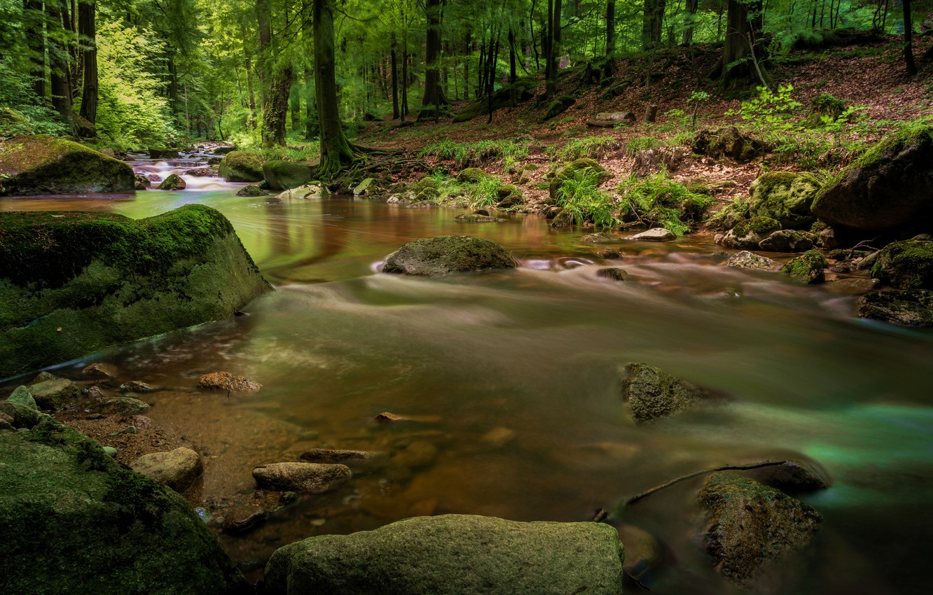 Photo wallpaper forest, trees, river, stones, for, waterfall, hdr