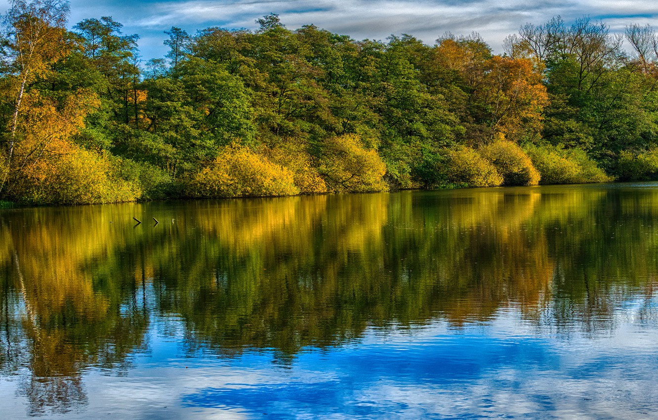 Photo wallpaper autumn, forest, trees, river, Germany, Saxony, Ahausen