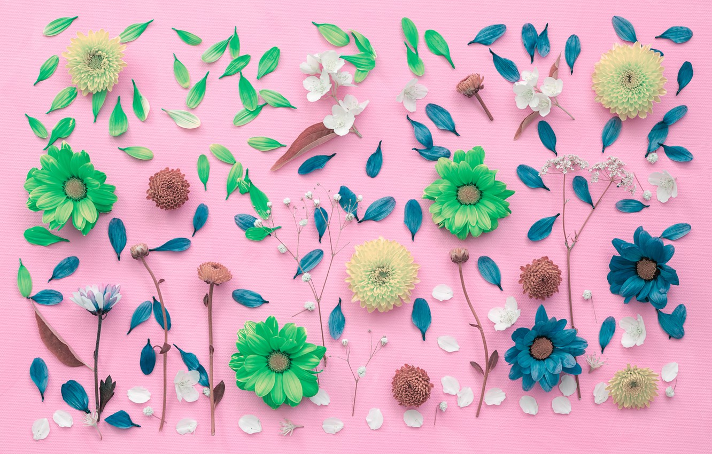 Photo wallpaper flowers, background, petals, chrysanthemum