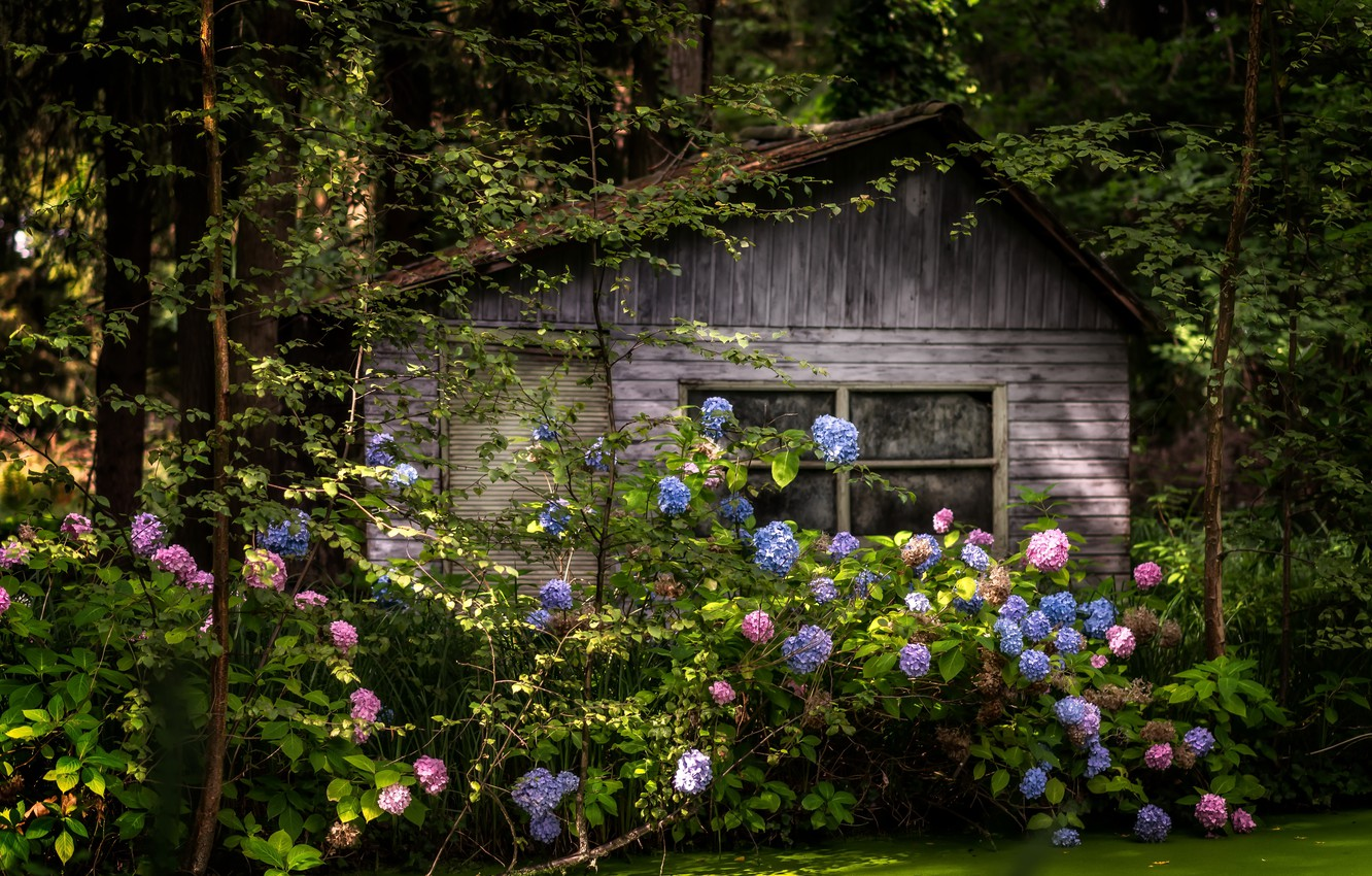 Photo wallpaper forest, flowers, house