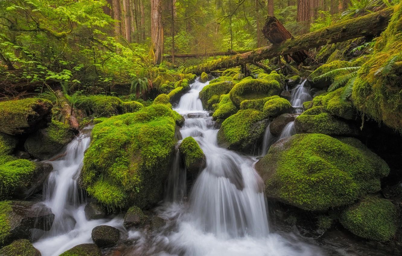 Photo wallpaper forest, stream, stones, waterfall, moss, river, cascade, Washington, Washington, Olympic National Park, Olympic national Park