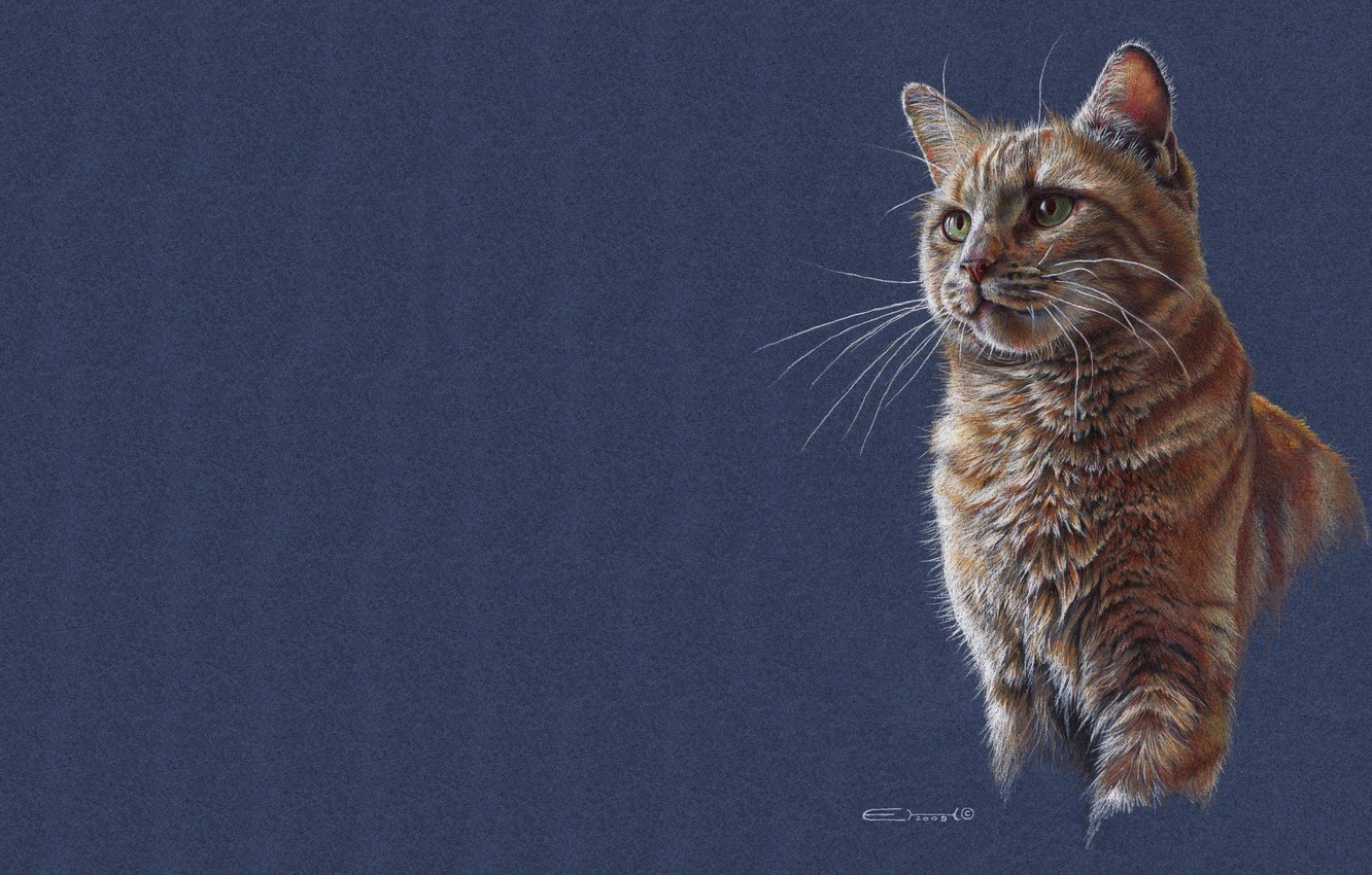 Photo wallpaper cat, cat, figure, art