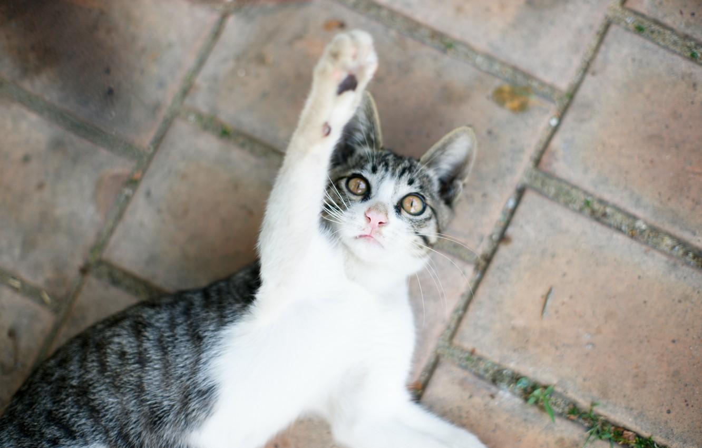 Photo wallpaper cat, kitty, plays