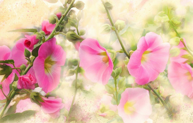 Wallpaper Flowers Figure Graphics Treatment Picture