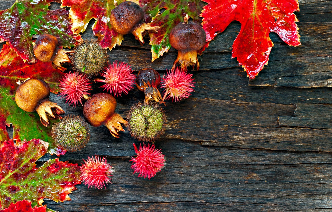 Photo wallpaper autumn, leaves, drops, wood, chestnuts