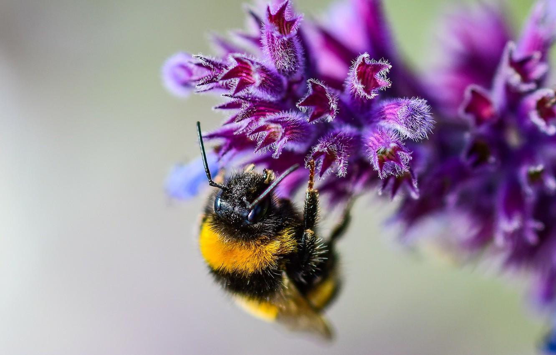 Photo wallpaper flower, macro, bee, bokeh