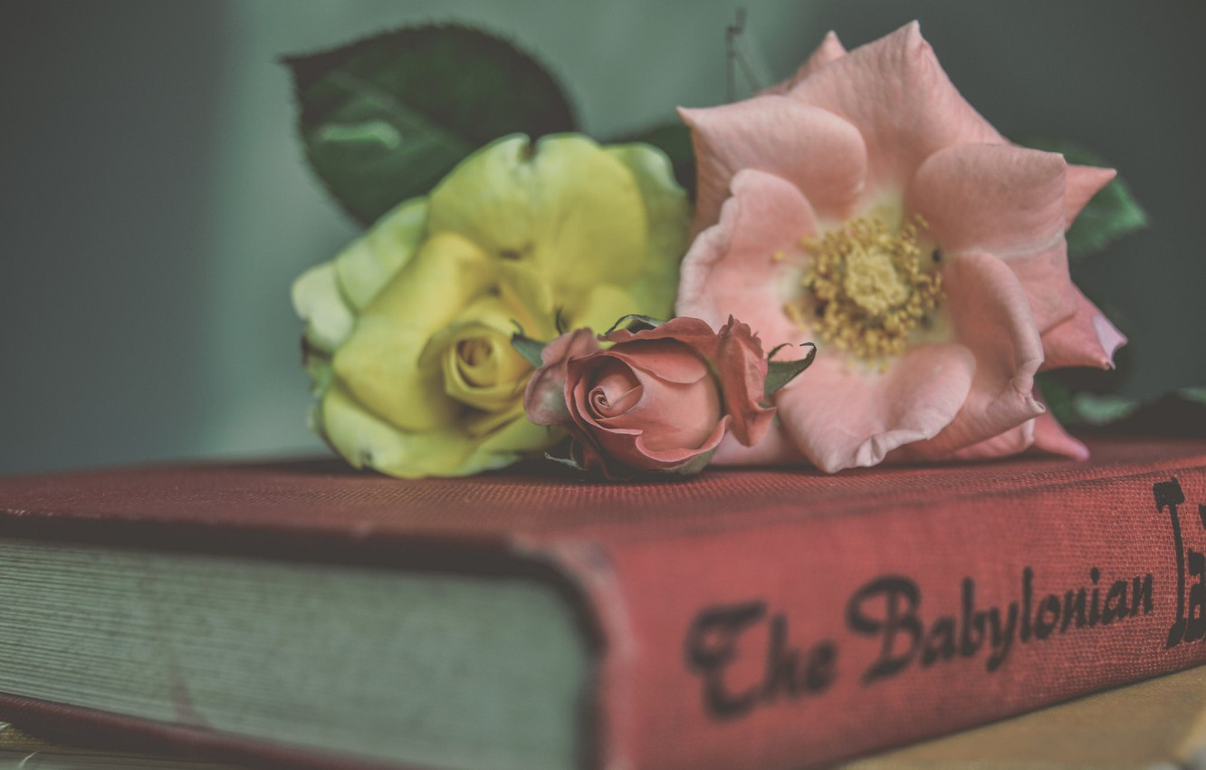 Photo wallpaper flowers, style, roses, book