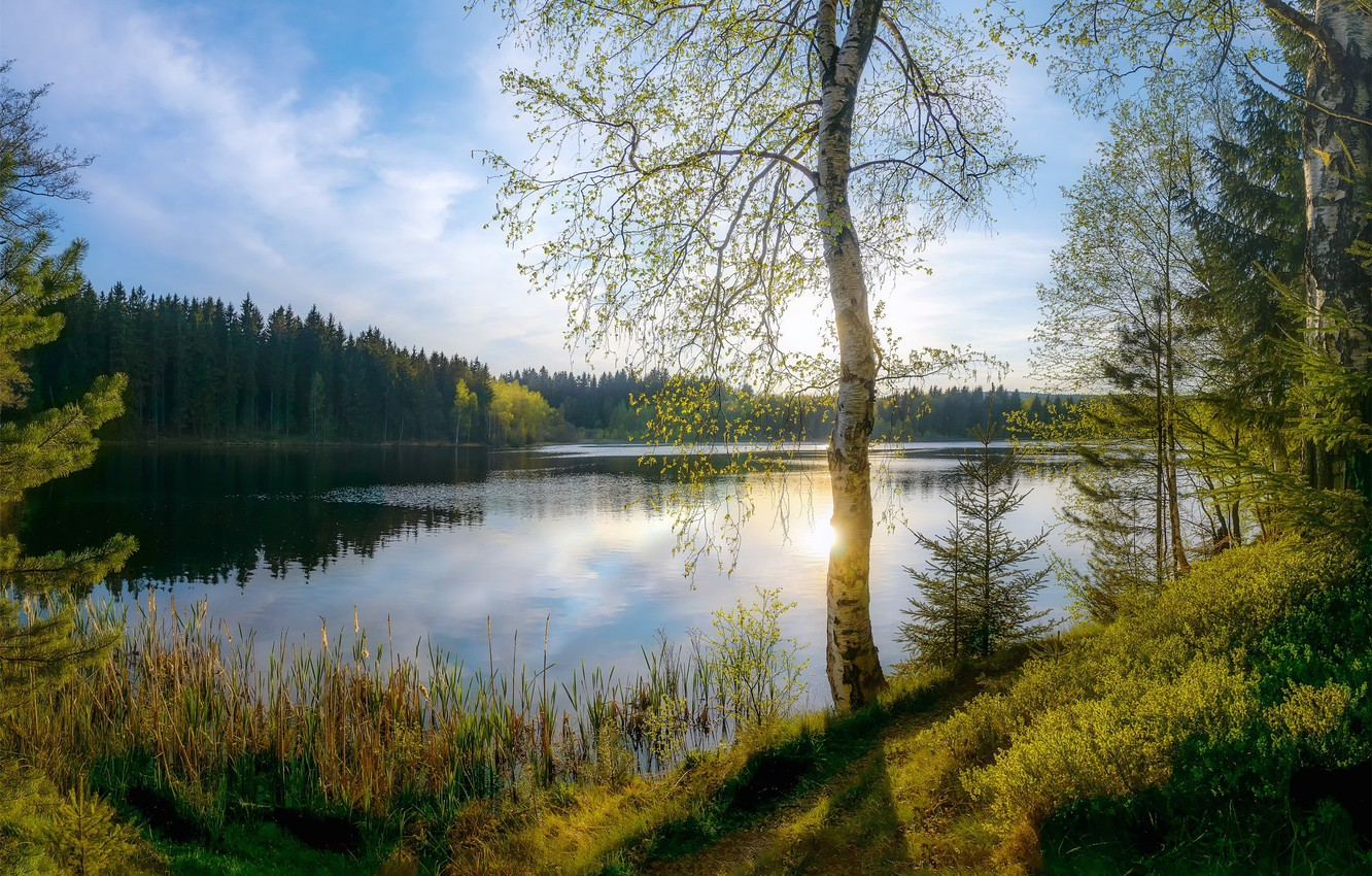 Photo wallpaper forest, light, nature, river, spring