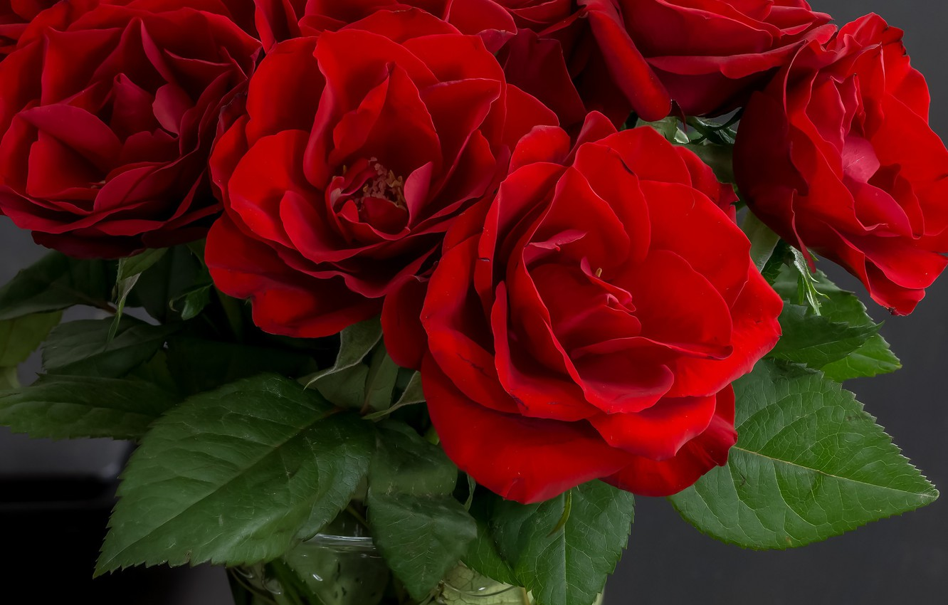 Photo wallpaper roses, bouquet, red, vase