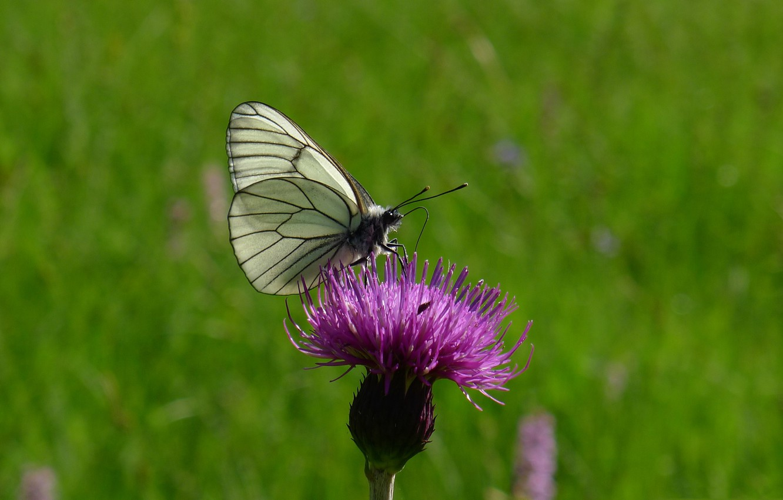 Photo wallpaper flower, nature, butterfly