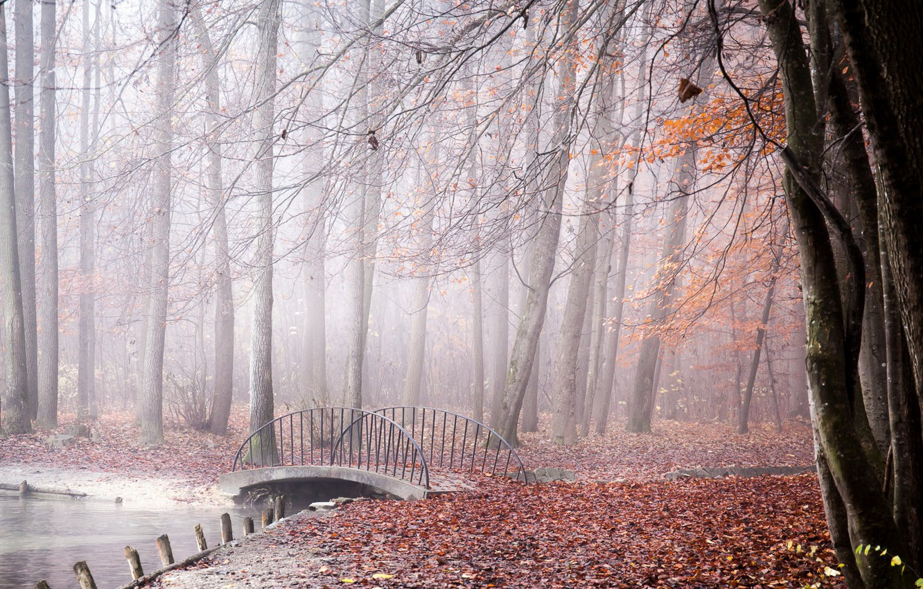 Photo wallpaper autumn, bridge, fog, Park