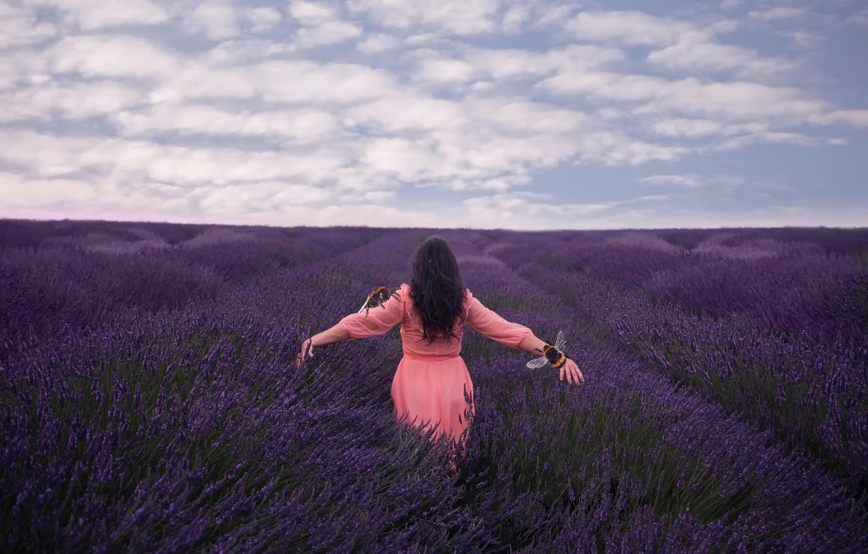 Photo wallpaper field, girl, lavender, bees, Lichon