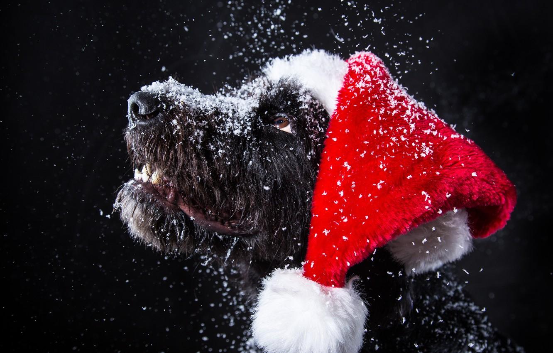Photo wallpaper snow, dog, New Year, Christmas, Christmas, dog, 2018, Merry Christmas, Xmas, funny, cute, decoration, santa …