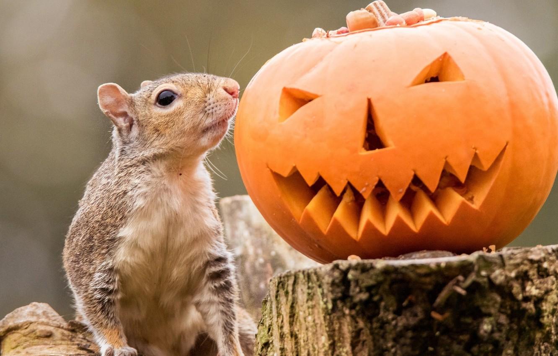 Photo wallpaper stump, protein, pumpkin, Halloween