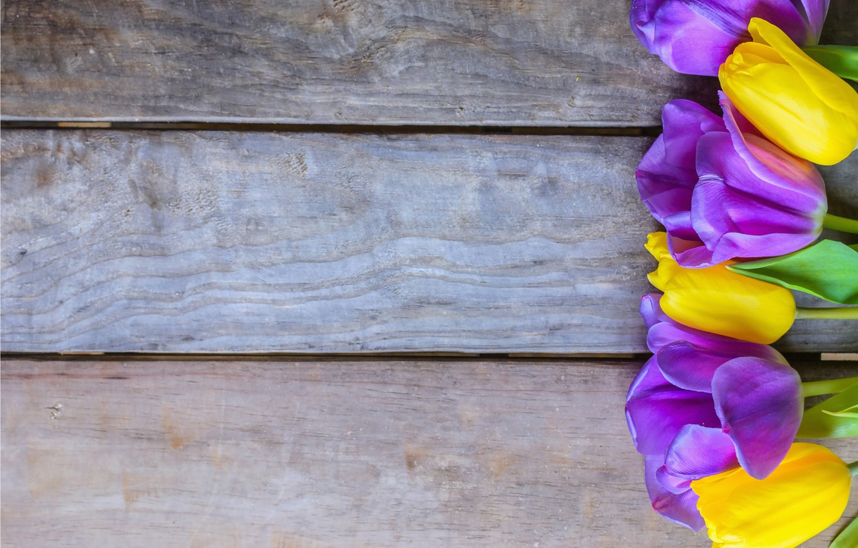 Download wallpaper x tulips flower bed contrast flowers
