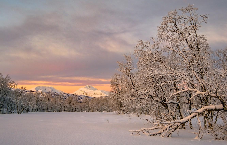 Photo wallpaper winter, snow, trees, mountains, Norway, Norway, Troms, Troms, Koford, Kvæfjord municipality, Storjord