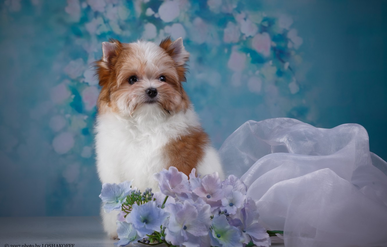 Photo wallpaper flowers, background, animal, puppy, fabric