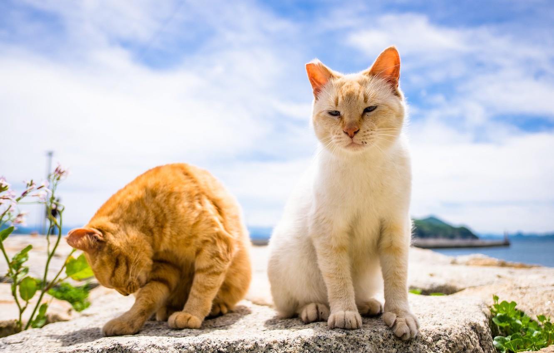 Photo wallpaper summer, background, cats