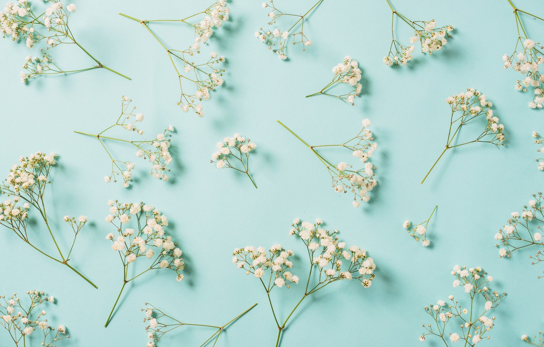 Wallpaper Flowers Background White White Flowers Spring