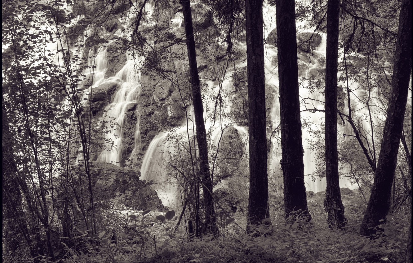 Photo wallpaper forest, trees, waterfall, Arbor Lux, Photo Landscapes