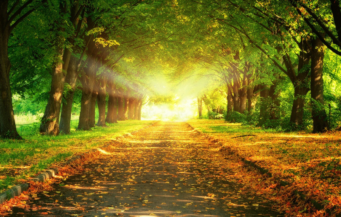 Wallpaper Nature Road Trees Leaves Light Alley Light Nature Shine Trees Way Alley Foliage Images For Desktop Section Priroda Download Wallpaper autumn road rays alley trees