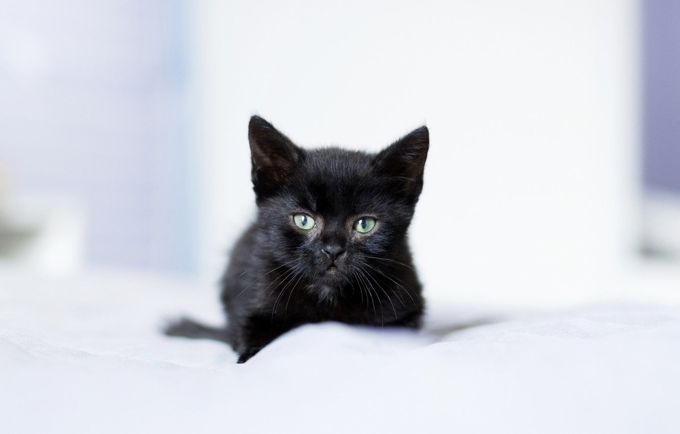 Wallpaper Look Baby Kitty Black Kitten Images For Desktop Section Koshki Download