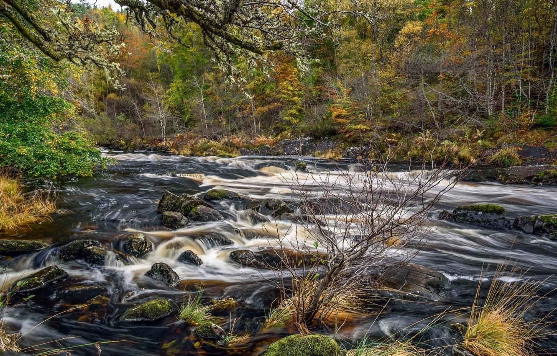 Photo wallpaper landscape, nature, stream, beauty