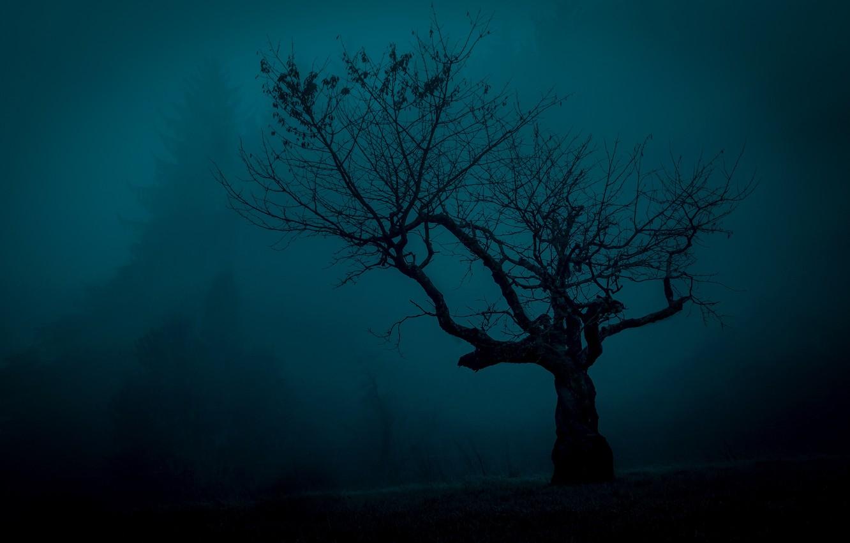 Photo wallpaper fog, tree, mystic, silhouette