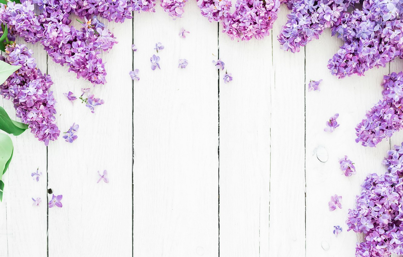 Wallpaper Flowers Background Spring Flowers Lilac Lilac