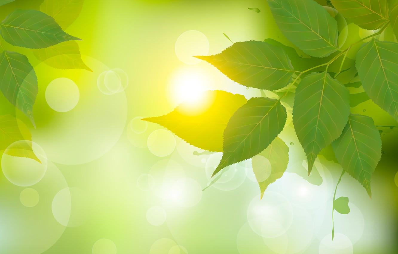 Photo wallpaper leaves, light, green, birch