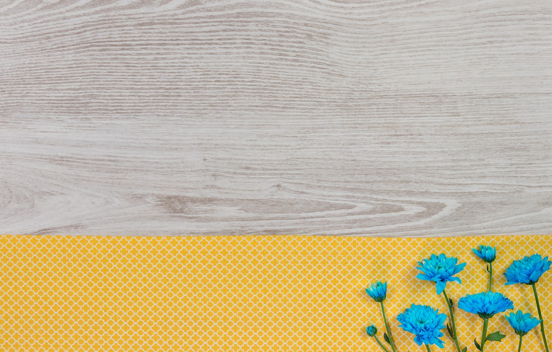 Photo wallpaper flowers, background, chrysanthemum