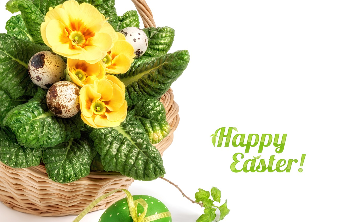 Photo wallpaper flowers, yellow, holiday, Easter, basket, Primula