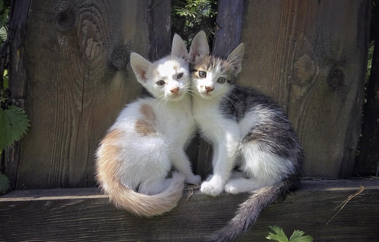 Photo wallpaper kittens, seals, Milota