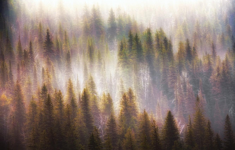 Photo wallpaper forest, light, nature, fog, morning