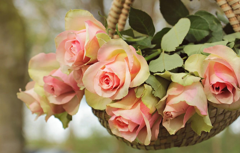 Photo wallpaper leaves, flowers, nature, background, rose, roses, bouquet, petals, gentle, pink, basket, buds, hanging, composition, pots