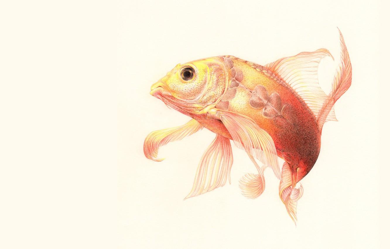 Photo wallpaper fish, art, bending, fins