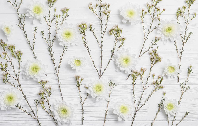 Photo wallpaper Greens, Flowers, Branches, Chrysanthemum