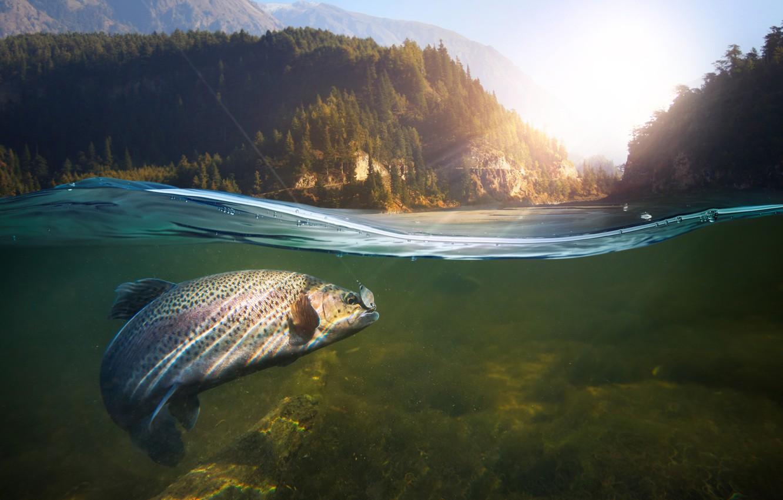 Photo wallpaper underwater, nature, water, fish, Fishing