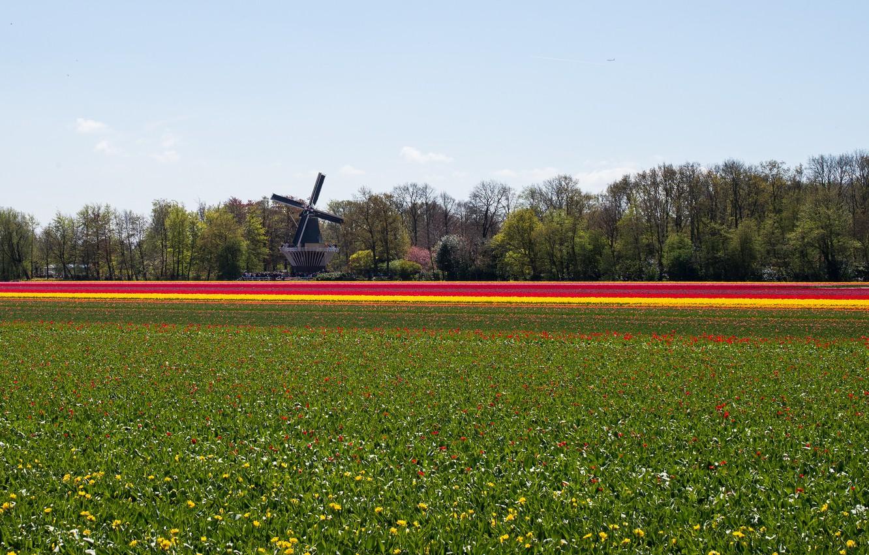 Photo wallpaper field, flowers, nature, mill, Landscape