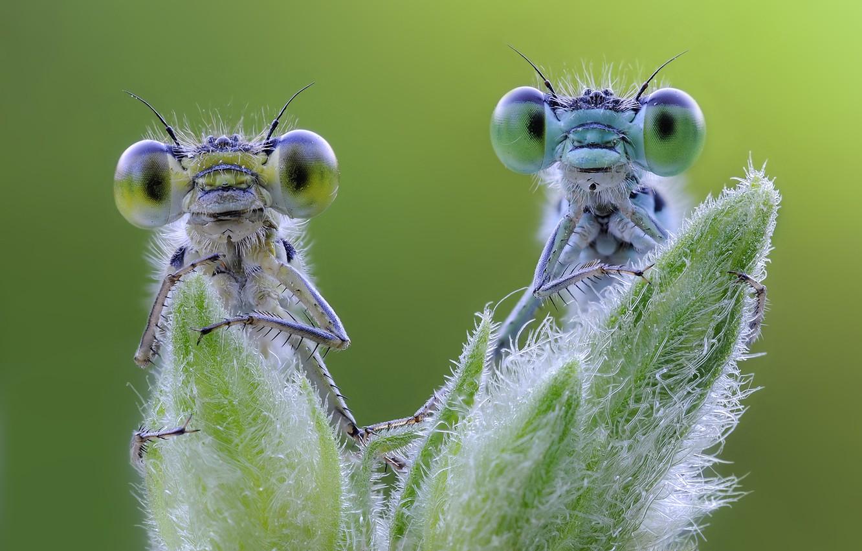 Photo wallpaper macro, foliage, green background, dragonflies
