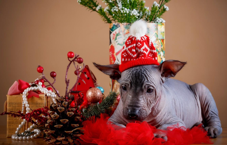 Photo wallpaper holiday, new year, puppy, bumps, cap, decor