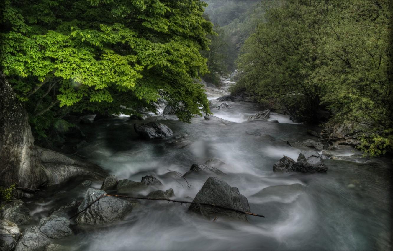 Photo wallpaper trees, river, stones, rapid