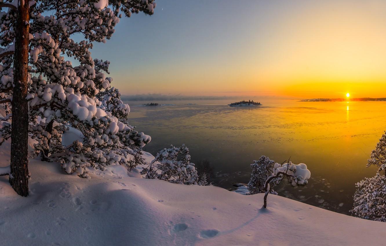 Photo wallpaper winter, snow, trees, landscape, nature, lake, pine, Karelia, Ladoga